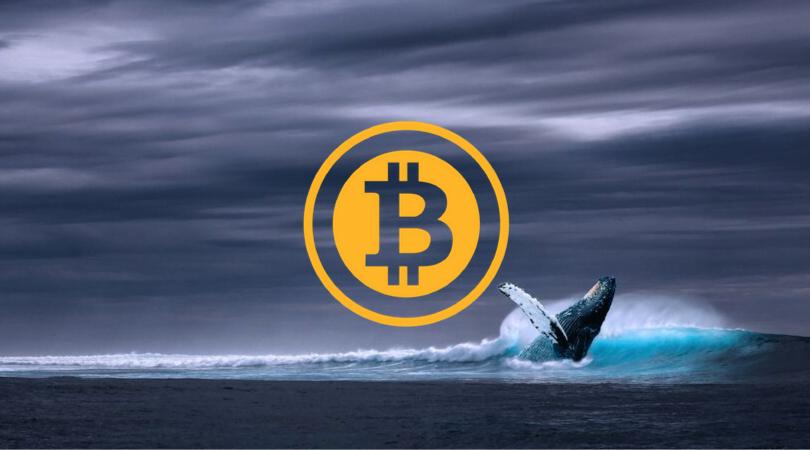 wieloryby BTC