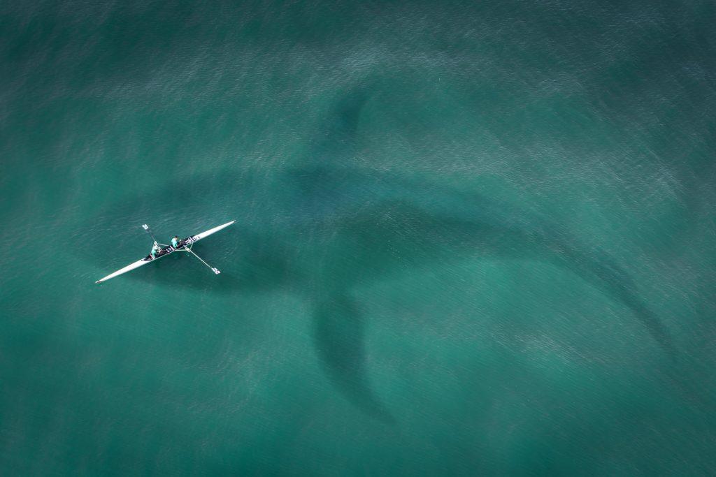 wyginięcie wielorybów btc
