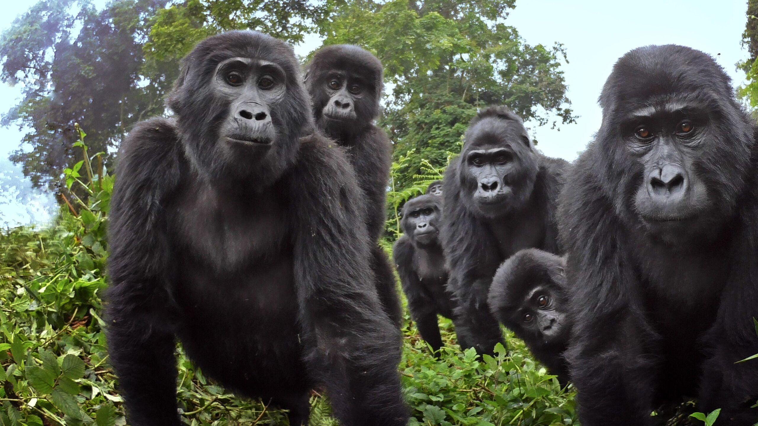 małpach