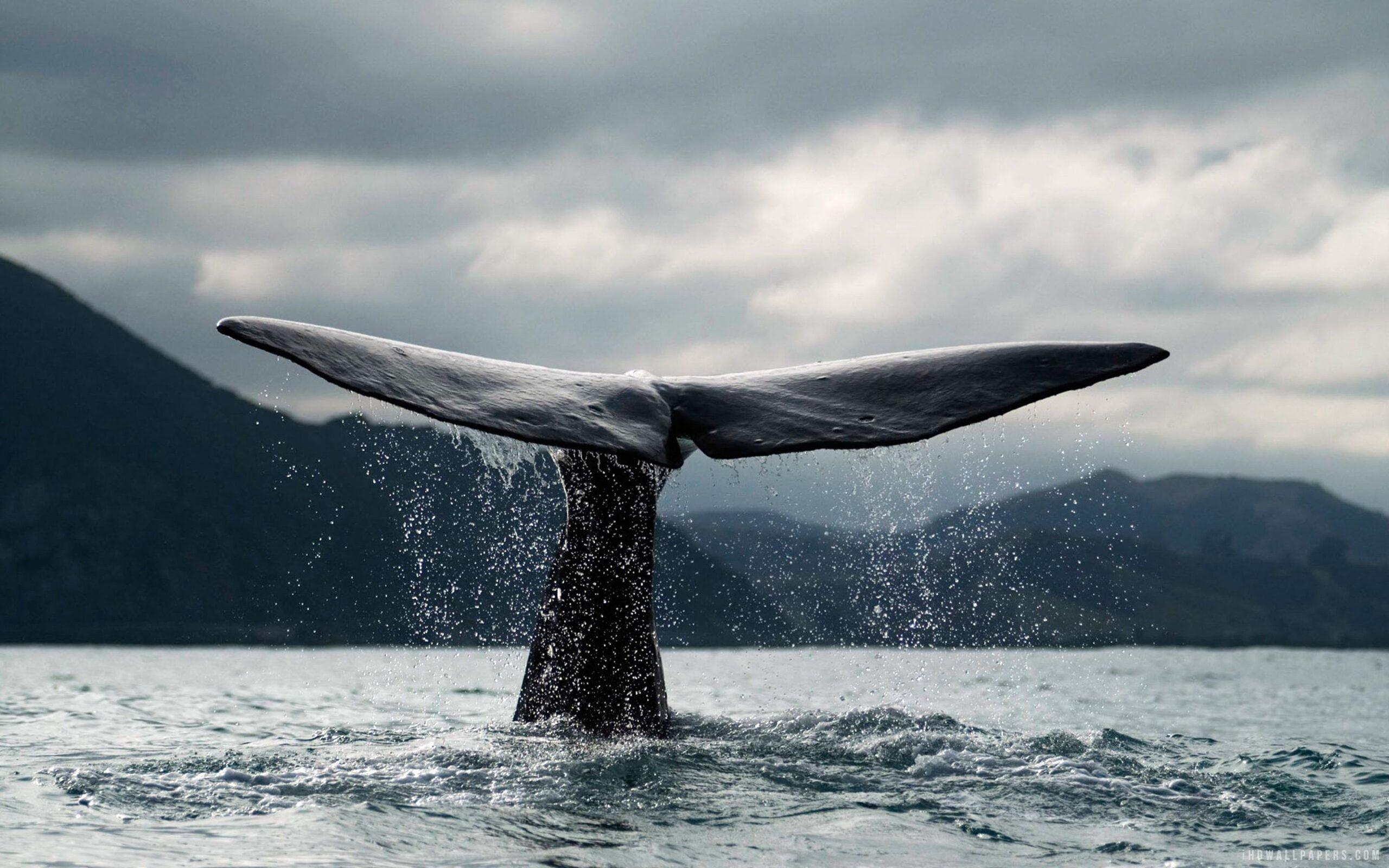 wieloryby bitcoin